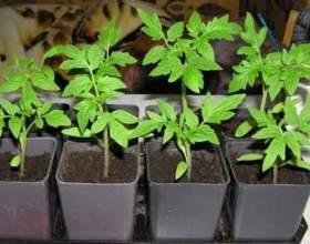 10 «Не можна» при вирощуванні розсади томатів фото