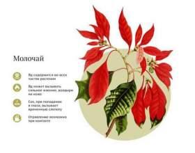 10 Небезпечних кімнатних рослин. Їх потрібно знати !!! фото