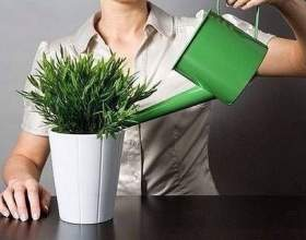 10 Причин, за якими гинуть квіти в будинку фото