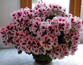 10 Простих порад досвідченого квітникаря фото