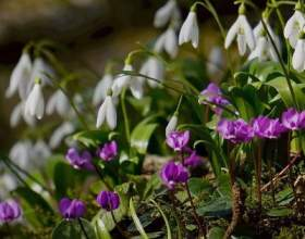 10 Важливих справ в саду, які потрібно терміново зробити до квітня фото