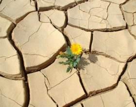 12 Причин ніколи не здаватися. Знайдіть свою! фото