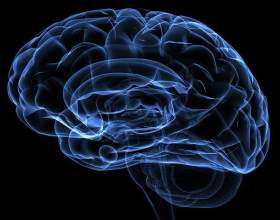 13 Помилок мозку фото