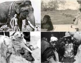 20 Самих аморальних експериментів в історії людства на межі добра і зла фото