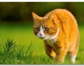 25 Доказів того, наскільки коти багатогранні й талановиті фото