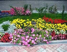 6 Кращих органічних добрив для квітника фото