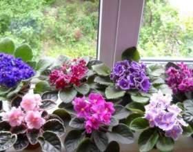 6 Рад, як залучити в будинок щастя, любов і достаток за допомогою домашніх рослин! фото