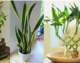 7 Рослин, які направлять енергетику вашого будинку в позитивне русло! фото