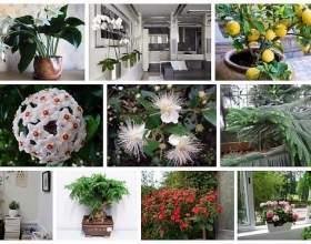 9 Домашніх рослин замість освіжувачів повітря і саше фото