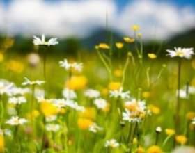 Алергія на пилок. Як розпізнати і як вберегтися ?! фото