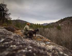 Американець подорожує по сша зі своєю хворою собакою, щоб скрасити останні дні її життя фото