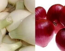 Білий і червоний лук: відмінності і корисні властивості фото