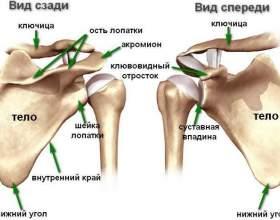 Хвороби, при яких німіє ліва рука фото