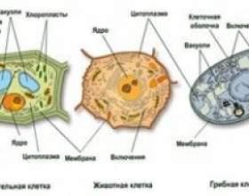 Чим гриби відрізняються від тварин і рослин фото