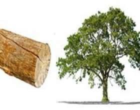 Чим відрізняється дерево від колоди - основні відмінності фото
