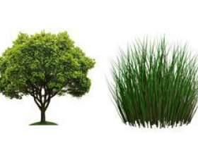 Чим відрізняється дерево від трави: опис і відмінності фото