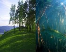 """Чим відрізняється наземно-повітряне середовище від водної С""""РѕС'Рѕ"""