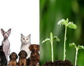 Чим тварини відрізняються від рослин фото