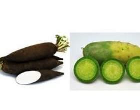 Чорна і зелена редька: чим вони відрізняються і що спільного фото