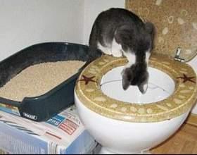 Що потрібно робити, щоб привчити свою кішку до лотка або унітазу? фото