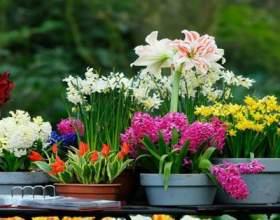 Щоб кімнатні рослини цвіли часто й подовгу потрібно поливати їх цим раз в місяць! фото
