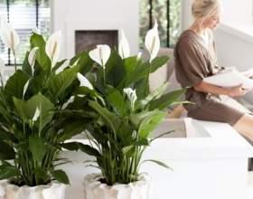 Щоб в будинку було щастя, потрібно завести ці рослини фото