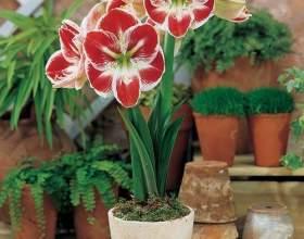 Квіткові прикмети фото