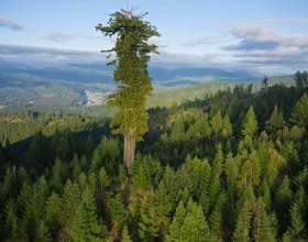 Дерево і людина або все люди схожі на дерева фото
