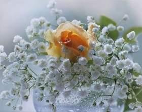Доброго ранку!!! фото