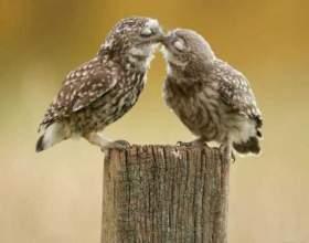 Факти про поцілунки фото