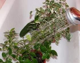 Гарячий душ для рослин фото