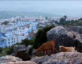 Місто шефшауен - національний унікум марокко. Він весь пофарбований в синій колір. Подивіться, як красиво! фото