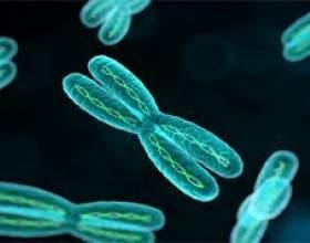 Хромосома і хроматин: що це і чим вони відрізняються? фото