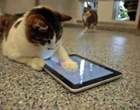 Ігри для кішок на ios фото