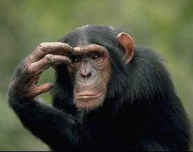 Ефект сотої мавпи фото