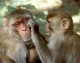 Ефект ста мавп фото