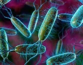 Як мікрофлора кишечника керує поведінкою людини фото