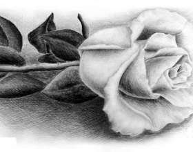 Як навчиться малювати троянду? фото