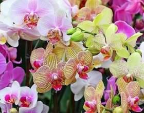 Як правильно доглядати за орхідеями - поради для новачків фото