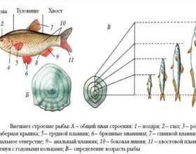 Як вибрати рибу - прості поради фото