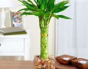 Які кімнатні рослини приносять матеріальне благополуччя? фото