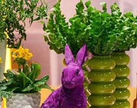 Кімнатні квіти для вашого будинку. Вибираємо рослини по знаку зодіаку фото