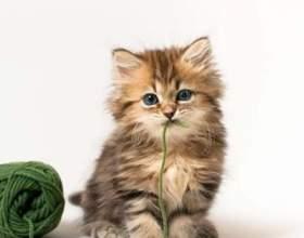 Кішка - це магічна тварина фото