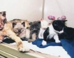 """Кішка винесла всіх своїх п`ятьох кошенят з пожежі С""""РѕС'Рѕ"""