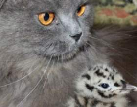 Коти стали батьками для чайки фото