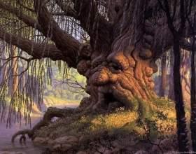 Лікування за допомогою енергії дерев фото