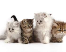 Лікуємося кішками фото