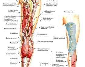 Симптоми пошкодження сідничного нерва при уколі і в інших травмах фото