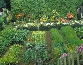 Народні прикмети для садівників і городників фото