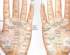 Наші руки - довідник нашого організму! фото